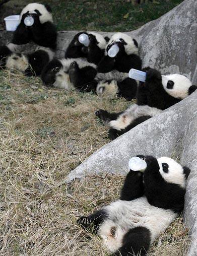 biberons party pour mes amis les pandas